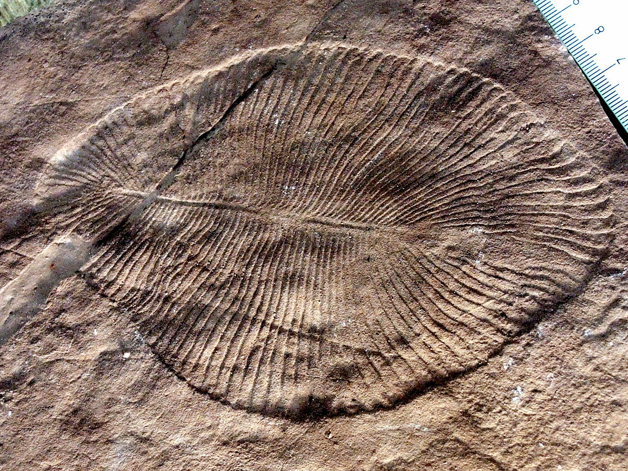 New explanation for Cambrianexplosion?