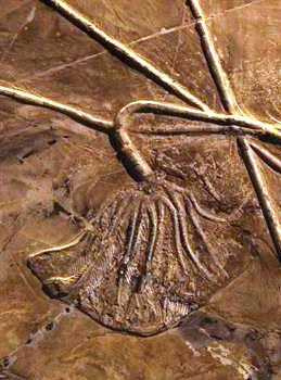 A history of paleontology inChina